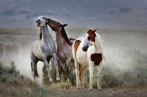 8033-Wild-Horses-Sand-Wash-Basin-Colorado