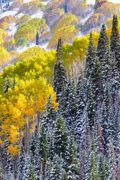 Colorado Fall Foliage Nature Art | Robbie George Photography