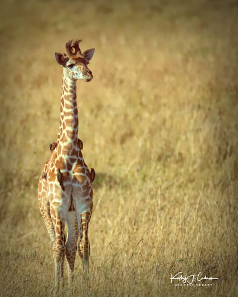 Kenya 2018 Giraffe 4114 Photography Art | Images2Impact