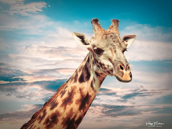 Kenya 2018 Giraffe 1 Photography Art | Images2Impact
