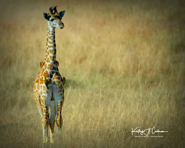Kenya 2018 Giraffe 2 Photography Art | Images2Impact
