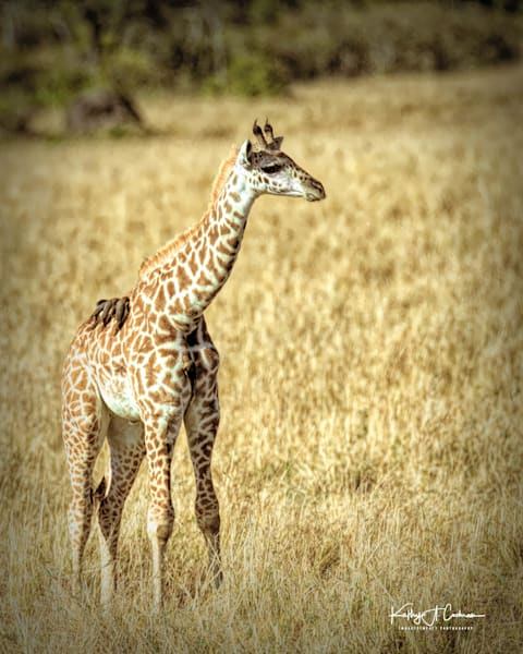 Kenya 2018 Giraffe 4107 Photography Art | Images2Impact