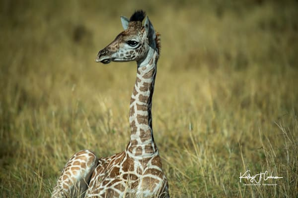 Kenya 2018 Giraffe 4217 Photography Art | Images2Impact