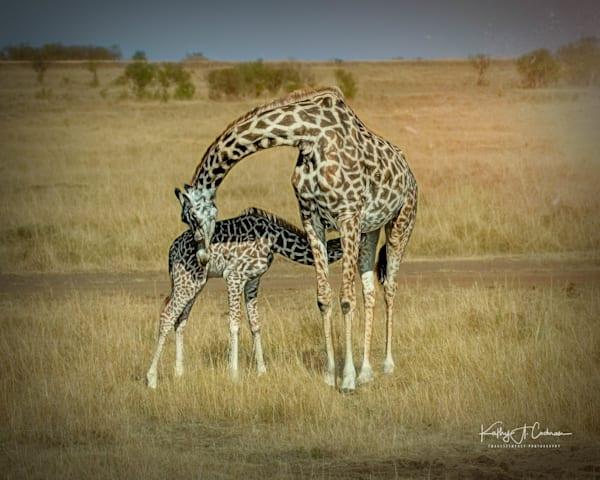 Kenya 2018 Giraffe-4296