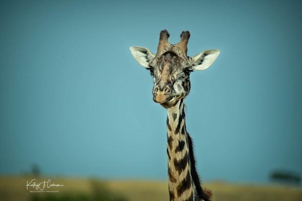 Kenya 2018 Giraffe-4362