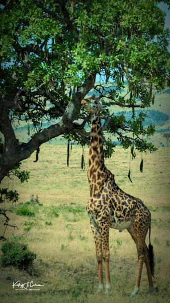 Kenya 2018 Giraffe-8871