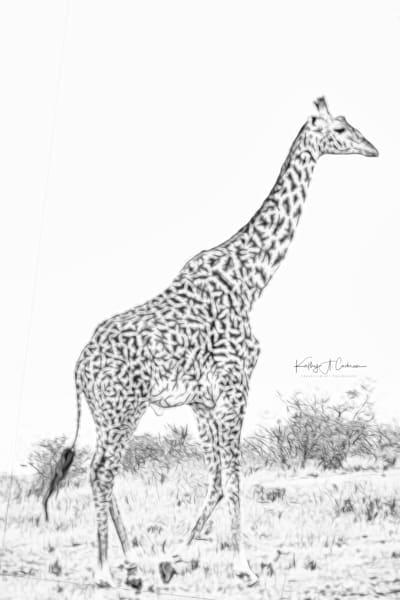 Kenya 2018 Giraffe-6922