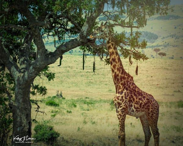 Kenya 2018 Giraffe-8862