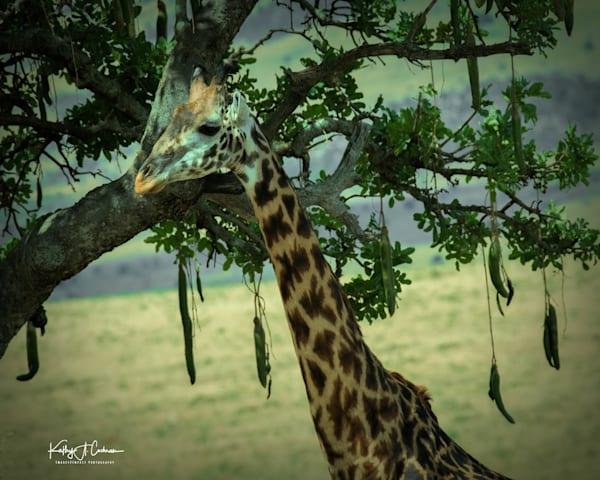 Kenya 2018 Giraffe-8880