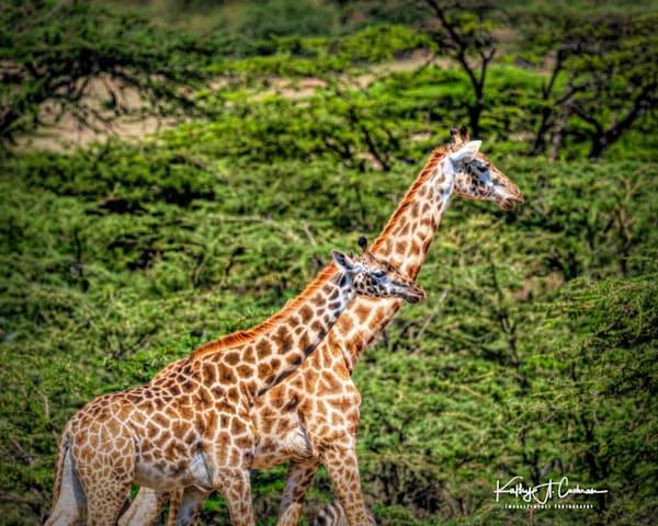 Kenya 2018 Giraffe-1111281