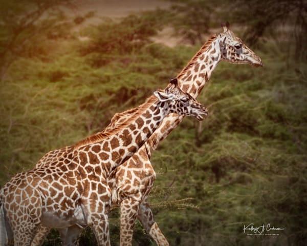 Kenya 2018 Giraffe-1111276