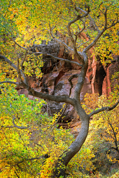 Zion Patriarch Morning