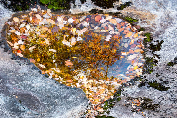 Maine Fall Foliage | Robbie George Photography