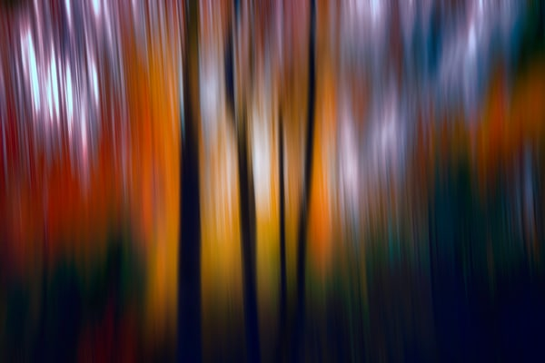 motion blurred images, fall leave on trees, colorful abstract photographs
