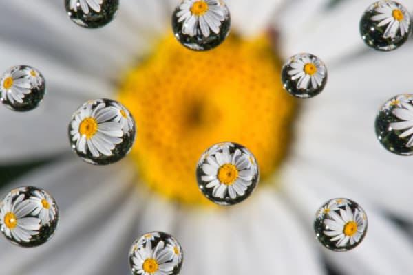 Wildflower Art | Robbie George Photography