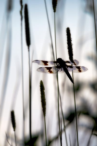 Dragonfly | Robbie George Photography