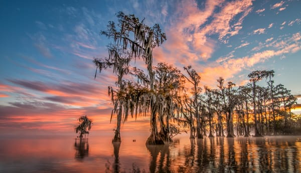 Lake Maurepas swamp photography