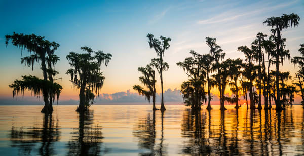 Lake Maurepas sunrise pano - Louisiana swamp photography prints