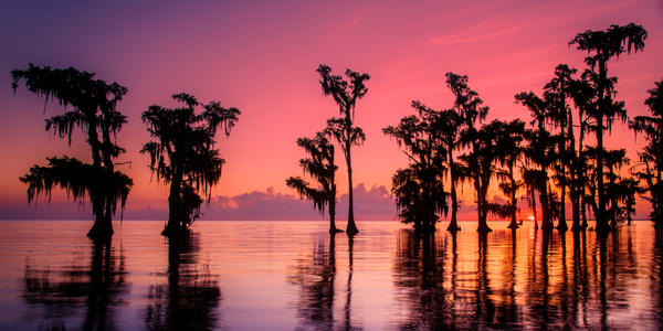 Sunrise swamp colorful sunrise photography