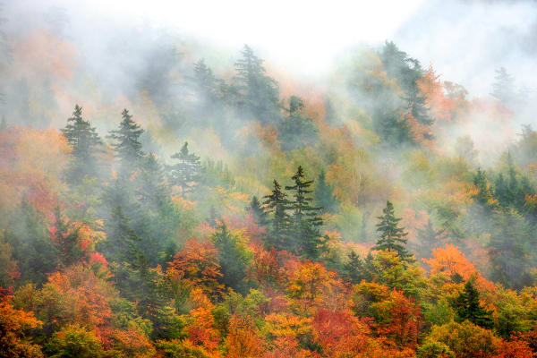 New England Autumn Nature Prints | Robbie George