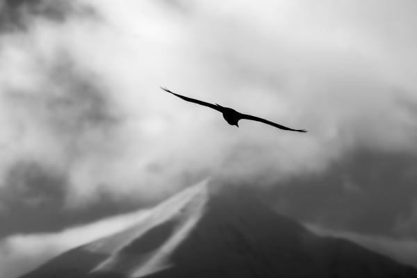 Raven Over Lone Peak