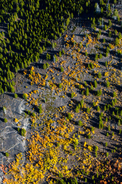 Setting Fall - Yellowstone