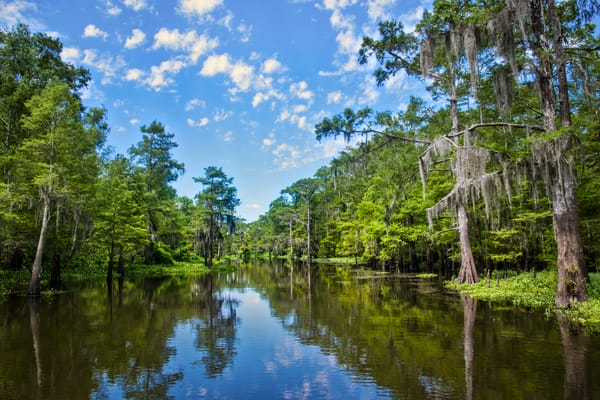 Atchafalaya Basin Bayou Cheverau photography