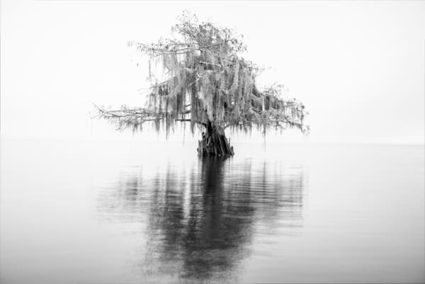Cypress in black-and-white photography prints