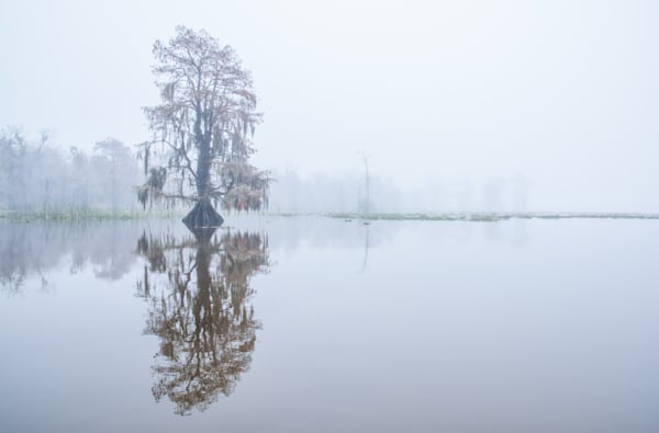 Cypress reflection swamp photography print