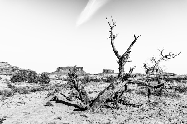 Twisted death in the desert photography print