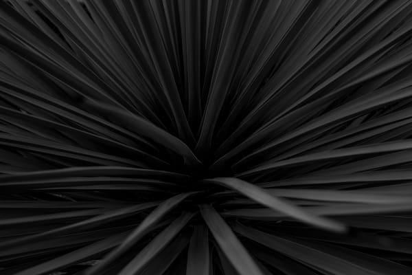 Flax Horizontal Black