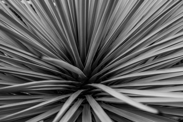 Flax Horizontal