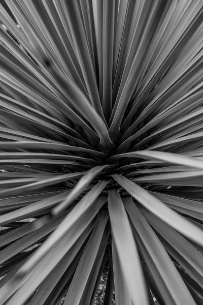 Flax 1