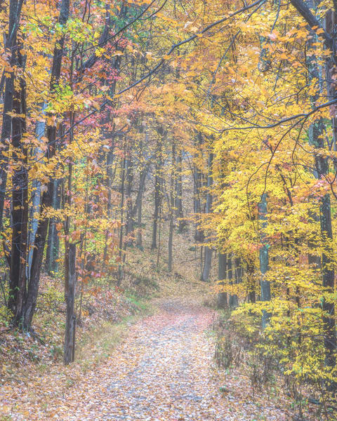 Road less traveled west virginia photography