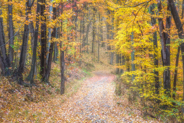 Forest road photography