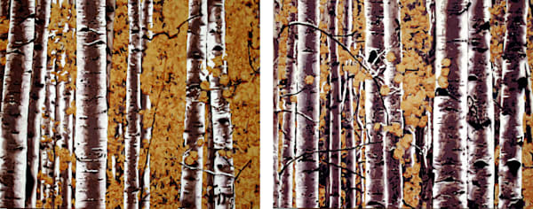 fall in the aspen grove