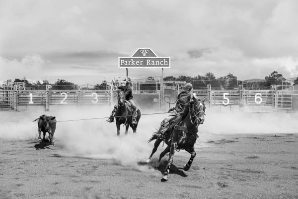 Rodeo Art | seelikeshane