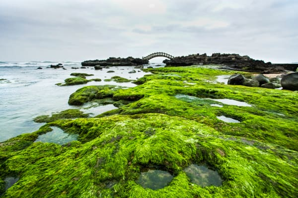 Moss Covered Beach:  Shane O'Donnell Photographer