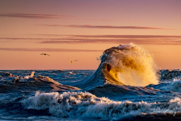 Splash Of Gold Photography Art   Trevor Pottelberg Photography