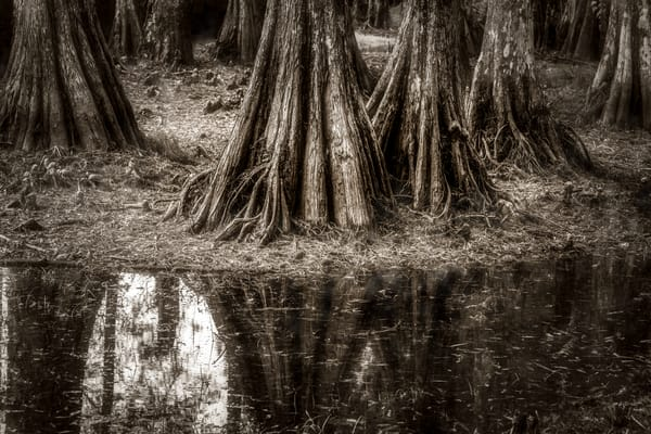 Cypress Island Louisiana swamp photography