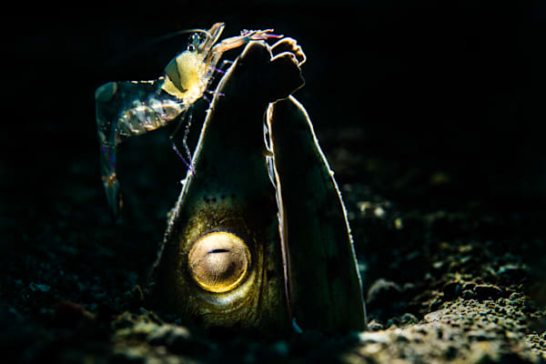 Snake eel and friend is available as a fine art photograph for sale.