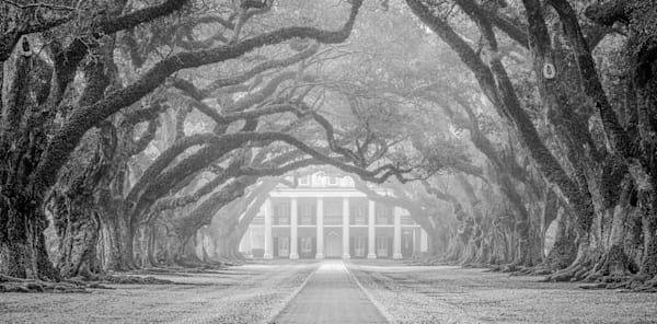 Oak Alley fog photography