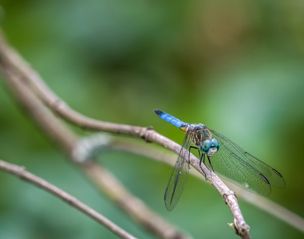 Dragonfly at rest photography