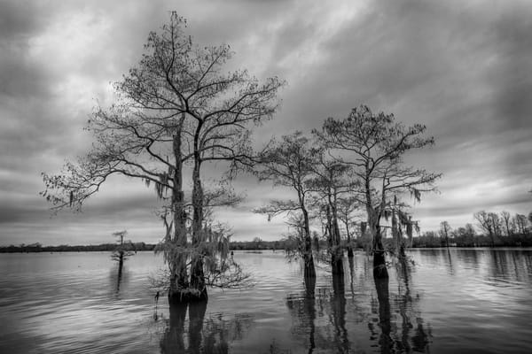 Henderson swamp black and white photography