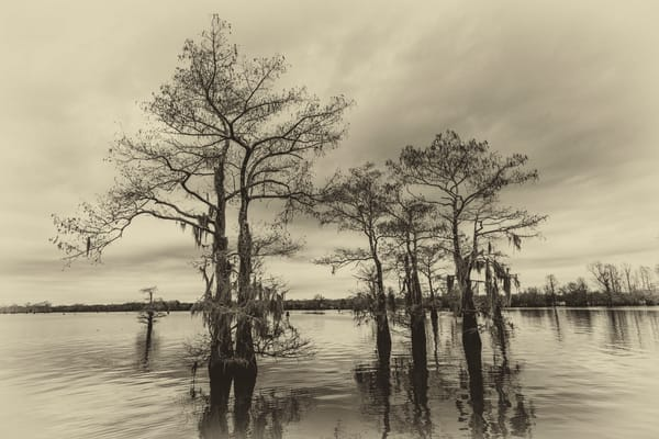 Vintage Henderson swamp photography