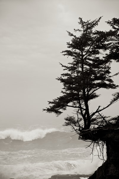 Dramatic photograph of a tree on the edge of a cliff.