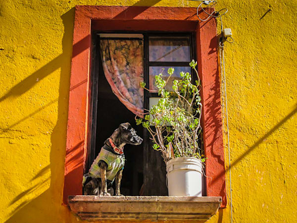Doggie In The Window  Photography Art | BenjieArts