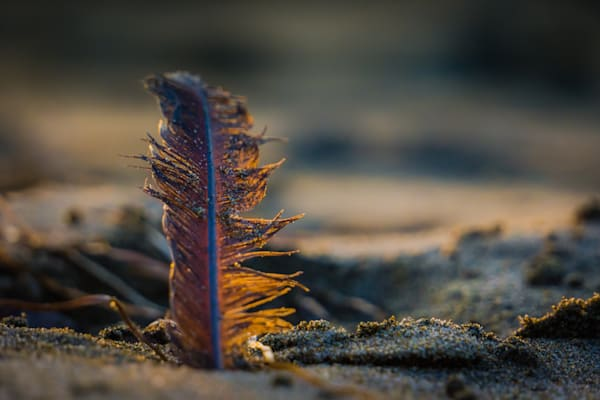 Feather On The Beach Photography Art | BenjieArts
