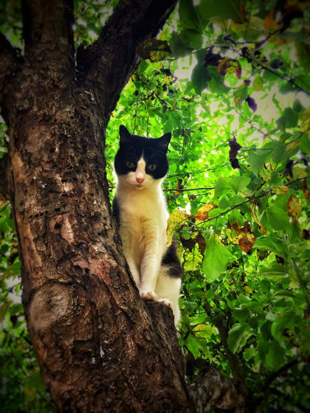 Sparky In The Tree Photography Art | BenjieArts
