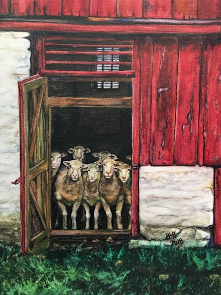 Sheep - Eight Dorsets at the Door